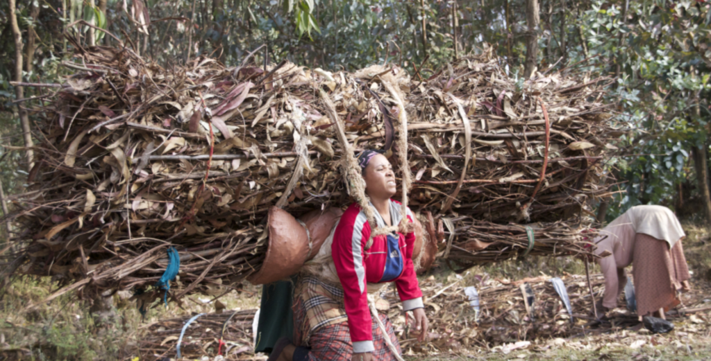 Approximately 90 percent of the workforce in this backbreaking trade of carrying fuelwood this way in this area are women. Photo by Christopher Lett/Mongabay.