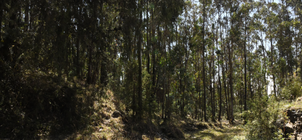 Retaining walls have been installed in areas around Entoto Mountain in an attempt to halt erosion caused by extensive eucalyptus plantations. Photo by Christopher Lett/Mongabay.